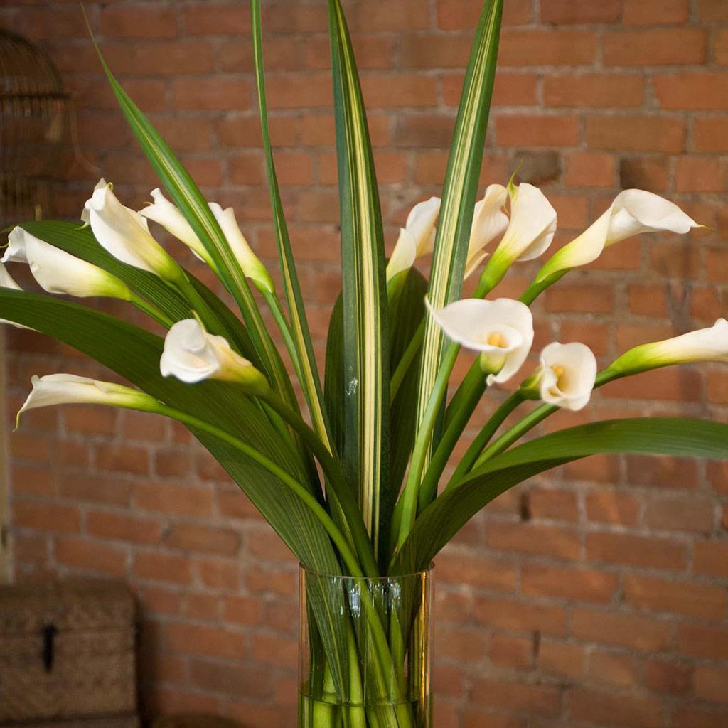 Callas' bouquet in Montréal
