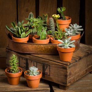 Plantes vertes et cactus chez la fleuriste Marie Vermette de Montréal